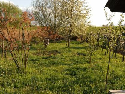 Garten Sabine Schimpf